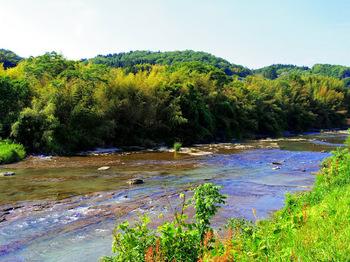 瑞浪市内の土岐川沿い